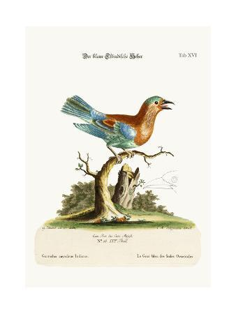 george-edwards-the-blue-jay-from-the-east-indies-1749-73