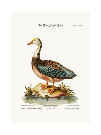 george-edwards-the-blue-winged-goose-1749-73