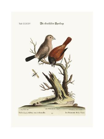 george-edwards-the-chinese-sparrows-1749-73
