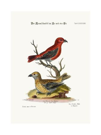 george-edwards-the-cross-bills-cock-and-hen-1749-73