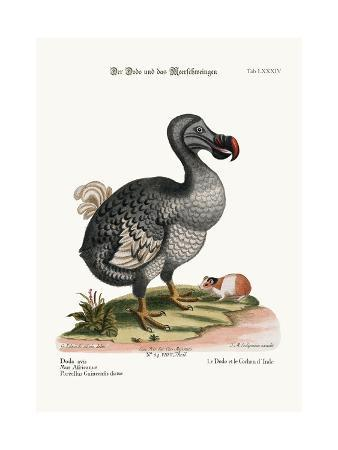 george-edwards-the-dodo-and-the-guiney-pig-1749-73