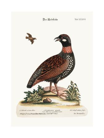 george-edwards-the-francolin-1749-73
