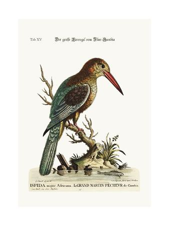 george-edwards-the-great-kingfisher-from-the-river-gambia-1749-73