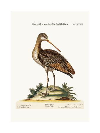 george-edwards-the-greater-american-godwit-1749-73