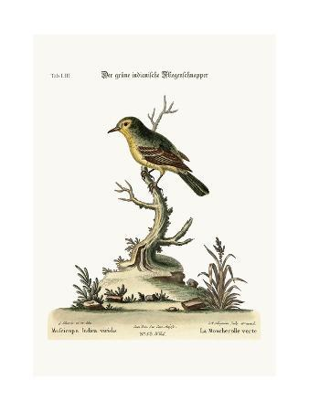 george-edwards-the-green-indian-flycatcher-1749-73
