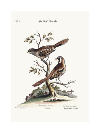 george-edwards-the-least-butcher-bird-1749-73