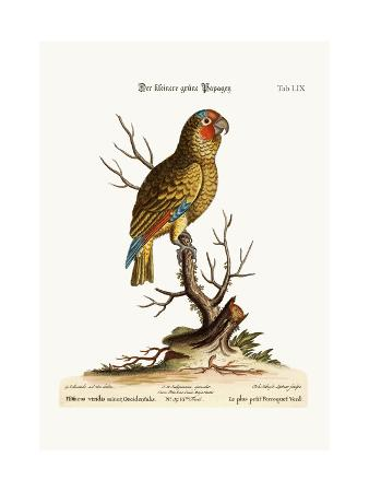 george-edwards-the-lesser-green-parrot-1749-73