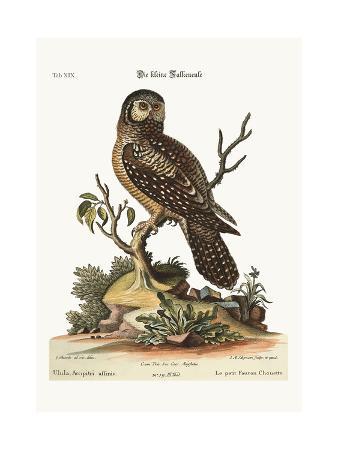 george-edwards-the-little-hawk-owl-1749-73