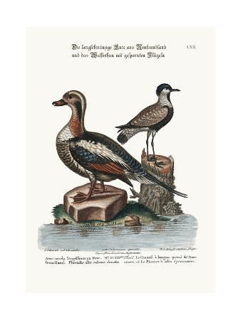 george-edwards-the-long-tailed-duck-from-newfoundland-and-the-spur-winged-plover-1749-73