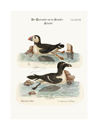 george-edwards-the-puffin-and-the-razor-bill-1749-73