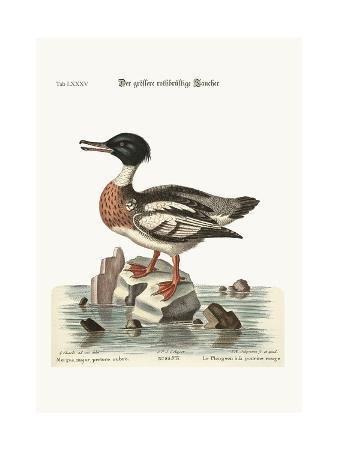 george-edwards-the-red-breasted-goosander-1749-73
