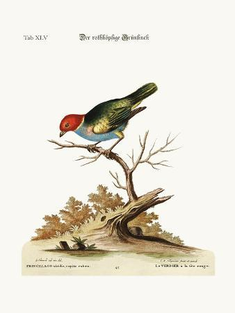 george-edwards-the-red-headed-green-finch-1749-73