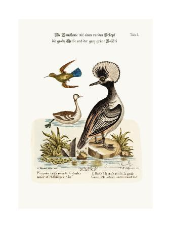 george-edwards-the-round-crested-duck-the-greater-dobchick-and-the-all-green-hummingbird-1749-73