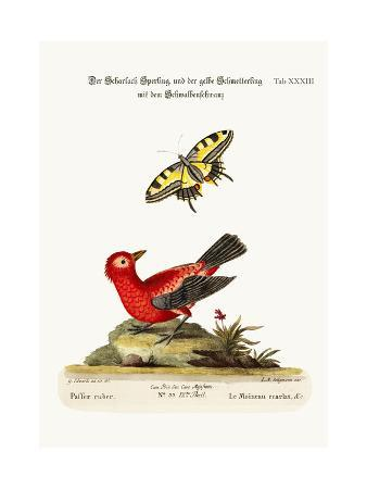 george-edwards-the-scarlet-sparrow-and-the-yellow-swallow-tailed-butterfly-1749-73