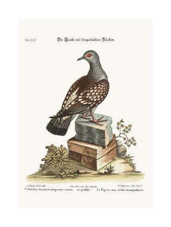 george-edwards-the-triangular-spotted-pigeon-1749-73