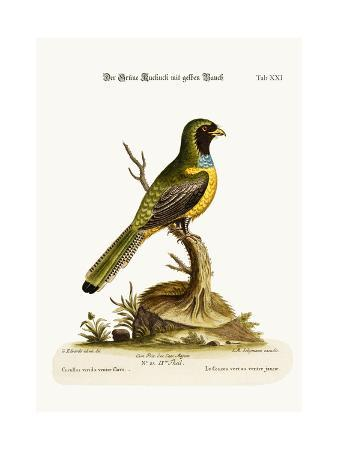 george-edwards-the-yellow-bellied-green-cuckow-1749-73