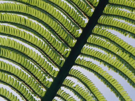 george-f-mobley-a-close-view-of-a-fern