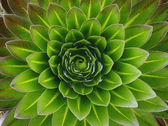george-f-mobley-a-giant-lobelia-plant