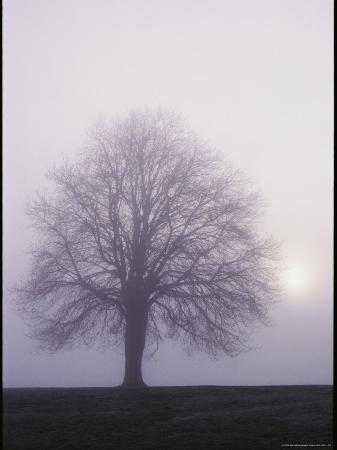 george-f-mobley-tree-in-the-morning-mist