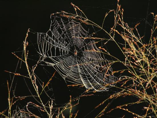 george-grall-an-orb-weaving-spider-sitting-in-the-center-of-its-web