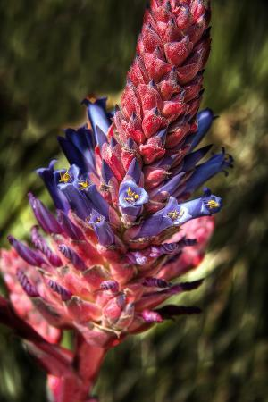 george-johnson-blue-and-red-flower
