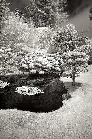 george-johnson-san-francisco-garden-iii