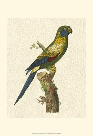 george-shaw-crackled-antique-parrot-i