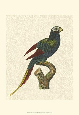 george-shaw-crackled-antique-parrot-iii