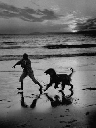 george-silk-afghan-dog-roaming-across-beach-with-girl-at-sundown-during-preparation-for-westminister-show