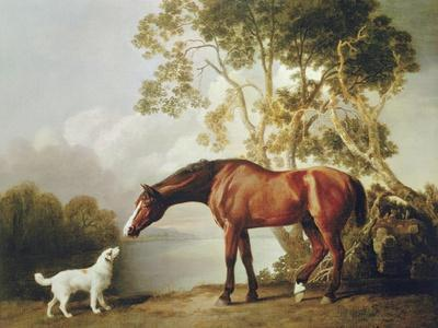 Bay Horse And White Dog Premium Giclee Print By George