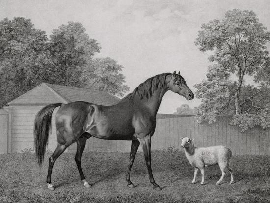 george-stubbs-dungannon-engraved-by-george-townley-stubbs-1756-1815-pub-1794-etching