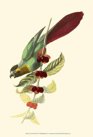 georges-cuvier-exotic-birds-iv
