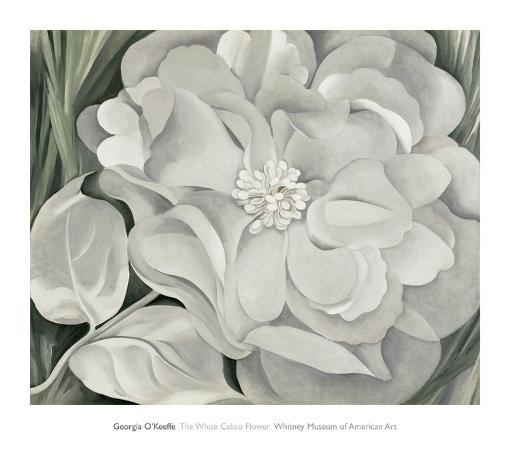 georgia-o-keeffe-the-white-calico-flower-c-1931