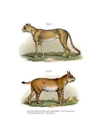 gepard-1860