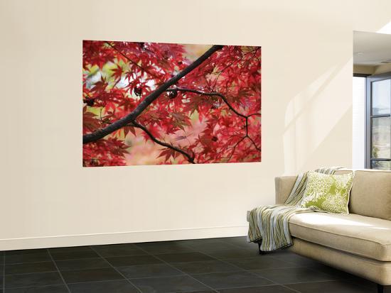 gerard-walker-maple-tree-in-autumn-colours-arishiyama-district