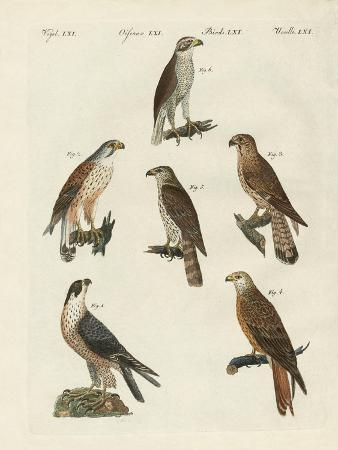 german-birds-of-prey