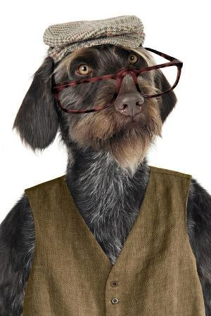 german-wire-haired-pointer-with-hat-glasses