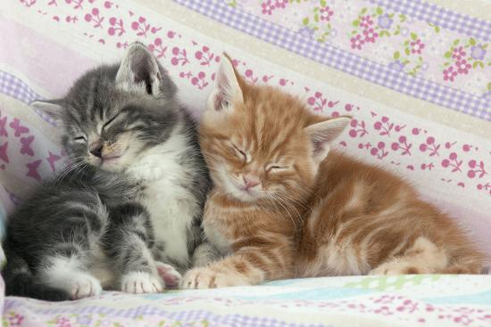 ginger-and-grey-tabby-kittens-sleeping