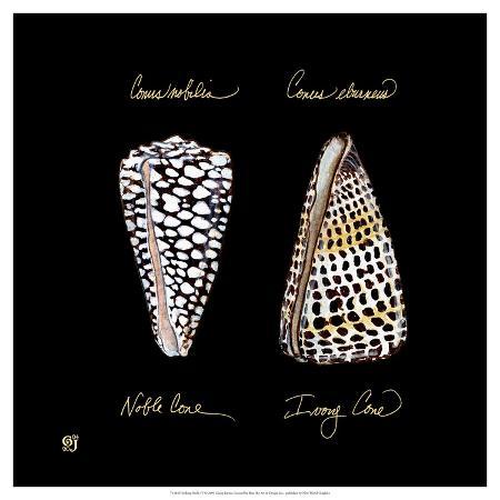 ginny-joyner-striking-shells-iv