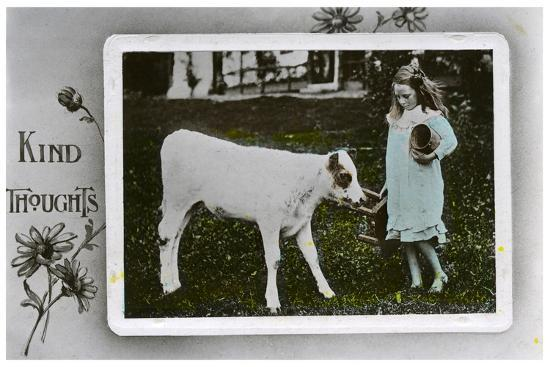 girl-about-to-milk-a-cow-greetings-card-c1890-1910