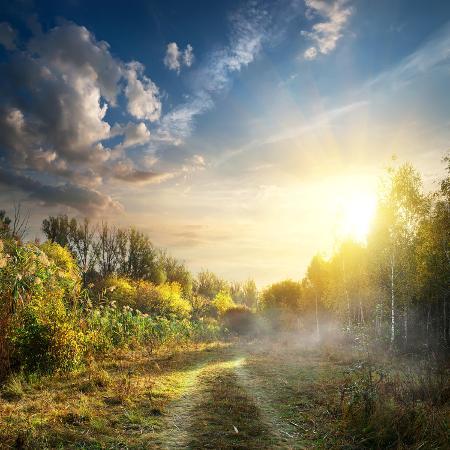 givaga-fog-in-autumn-wood-at-the-sunrise