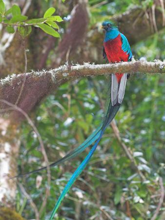 glenn-bartley-resplendent-quetzal-costa-rica