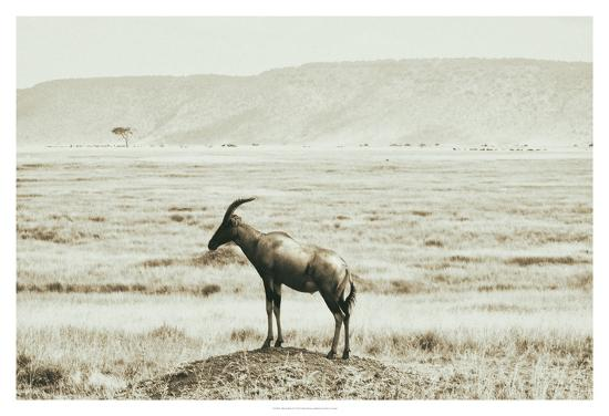 golie-miamee-african-plains-iv