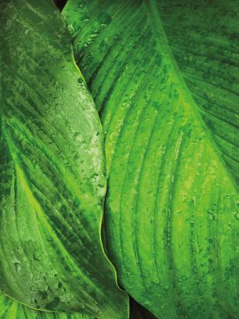 golie-miamee-jardim-botanico-iii