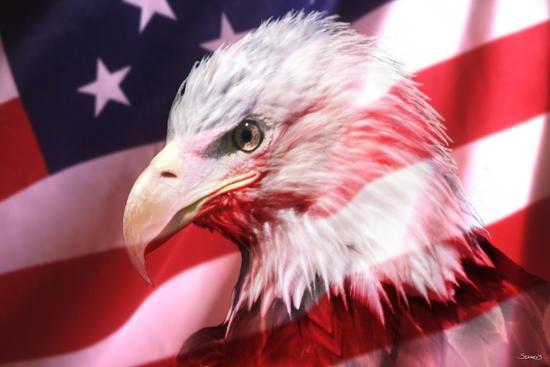 gordon-semmens-american-bald-eagle-ii