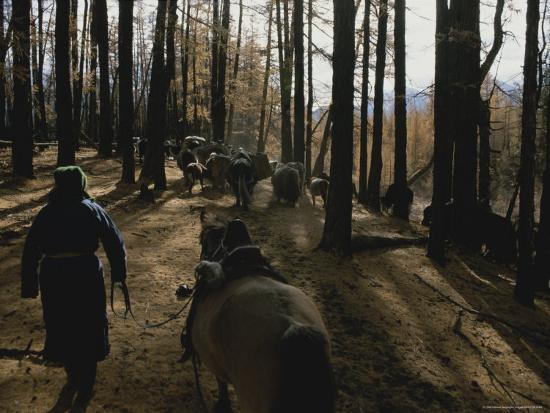 gordon-wiltsie-mongolian-woman-leads-her-herd-through-the-forest