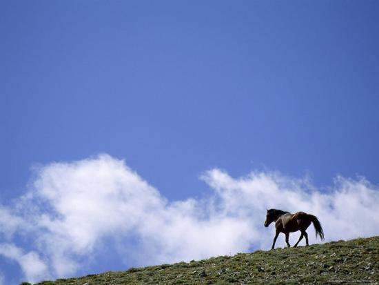 gordon-wiltsie-wild-mustang-on-the-crest-of-a-hill