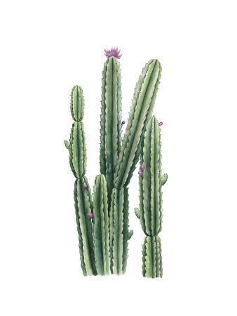 grace-popp-desert-blooms-ii