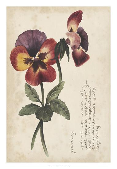 Garden Studies Ii Giclee Print By Grace Popp At