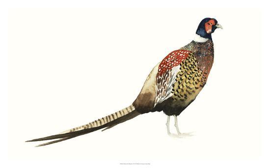 grace-popp-watercolor-pheasant-i